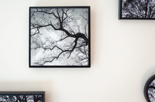 Collection «Des racines, du ciel»
